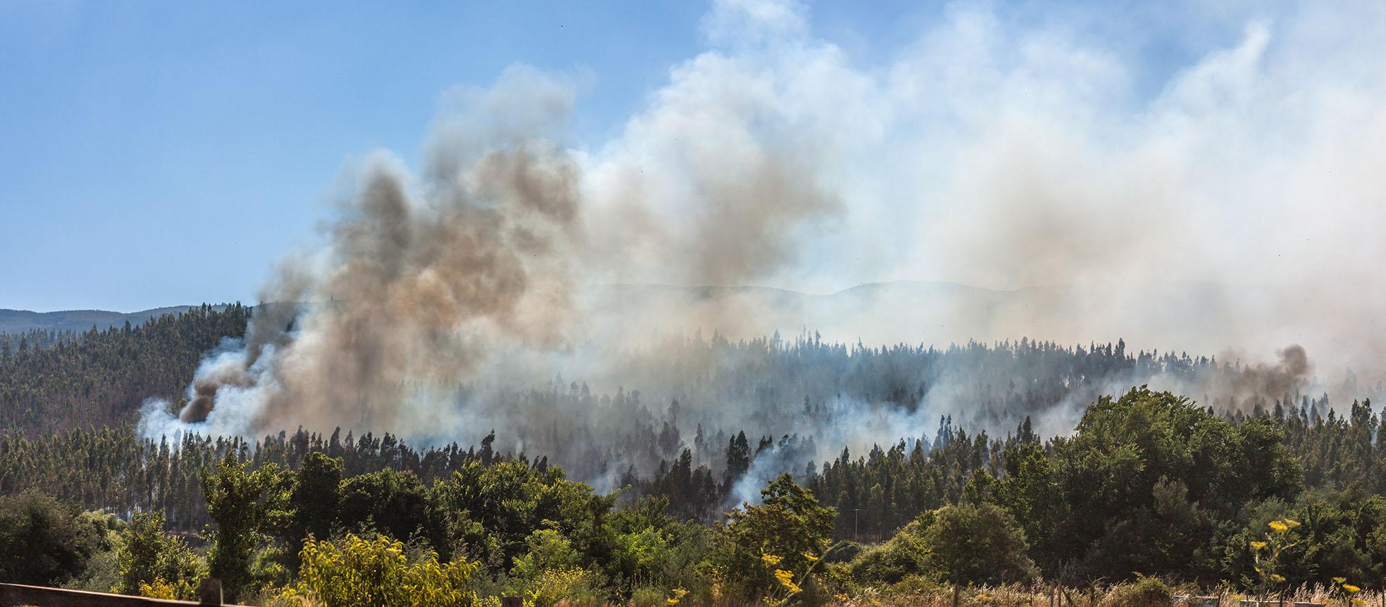 Especial | Planificación territorial para la mitigación de incendios forestales