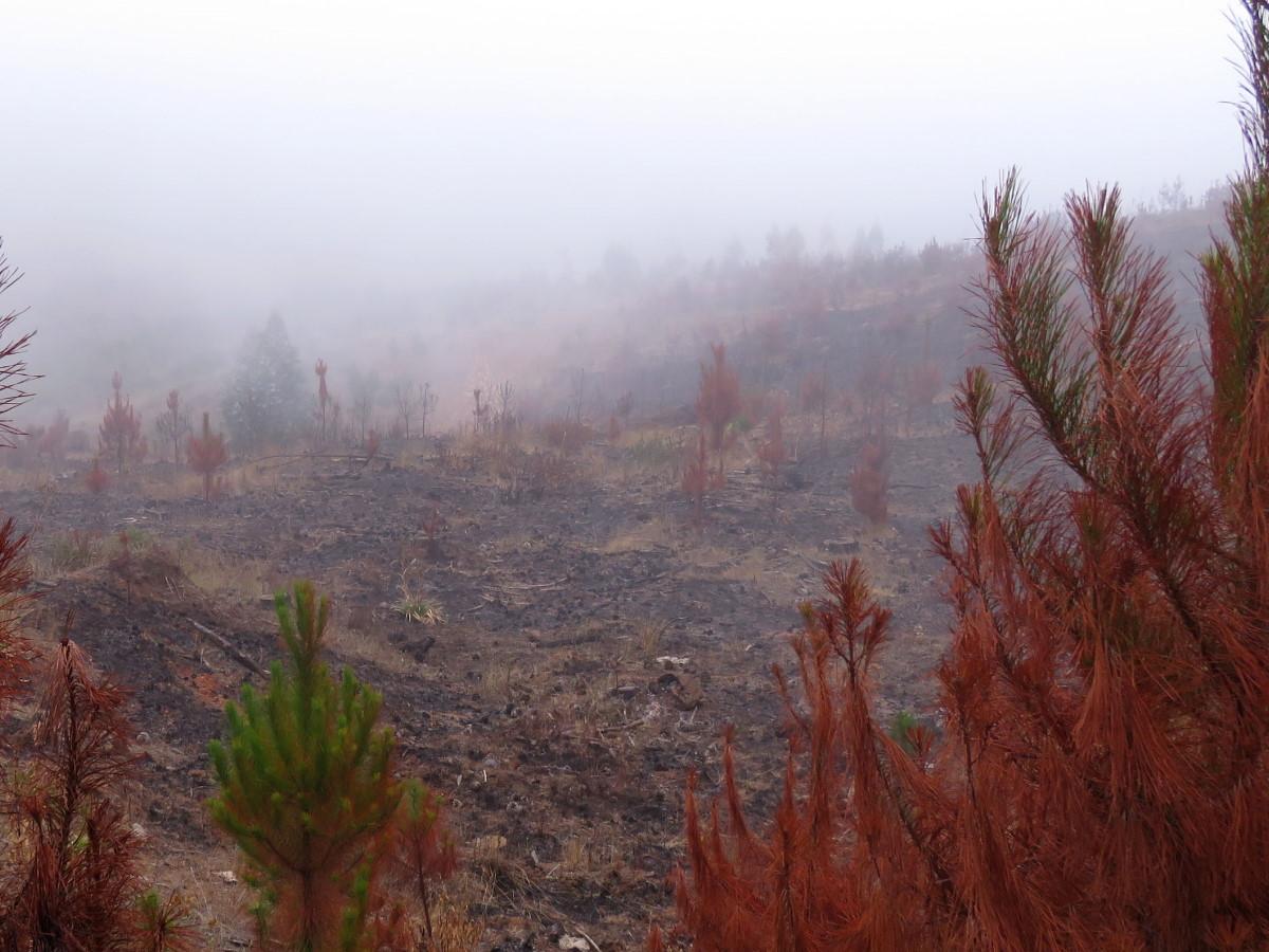 Especial planificación territorial   Deforestación, incendios y pandemias