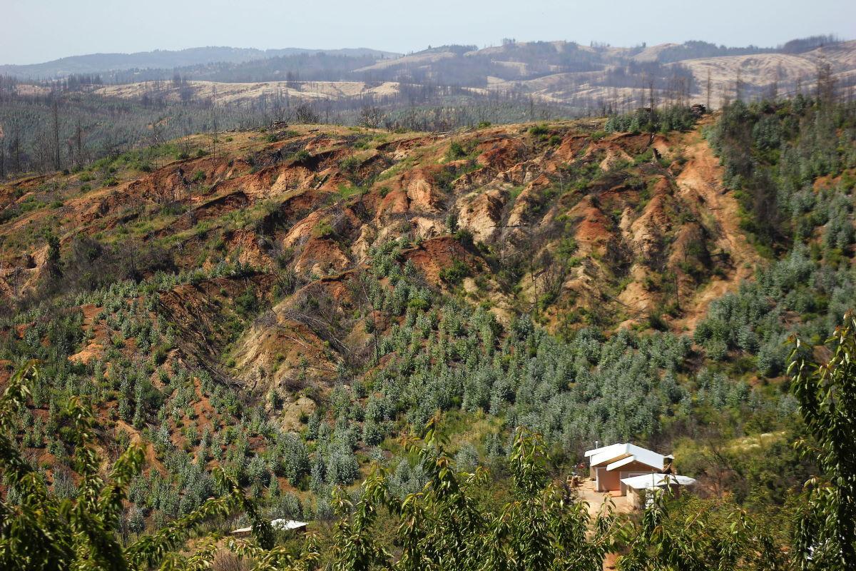 Especial planificación territorial | Reportaje: reducir el impacto de incendios forestales con gestión del territorio